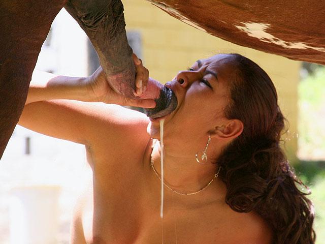 porno zoo Cheval cherche bonne suceuse vidéo porno