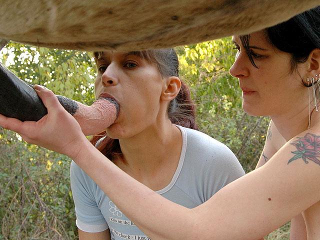 zooporn Gouinasses dégorgent le canasson film porno gratuit